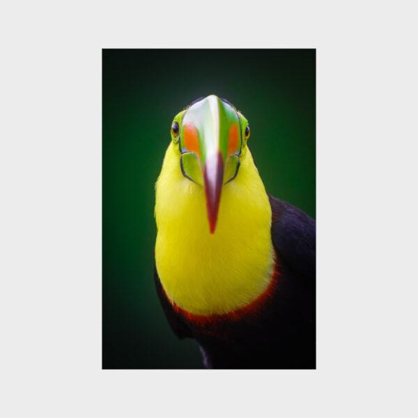 Pico Iris